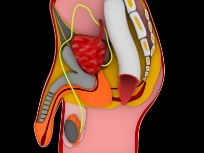 VigRxPlus for Erectile Dysfunction, Sexual Performance, Penis Size and Premature Ejaculation