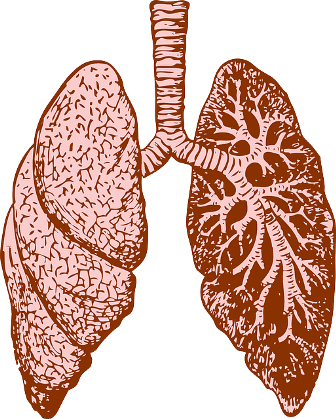 lungs-37824_640