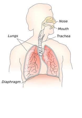 General Symptoms of Cystic Fibrosis