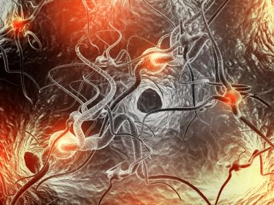 The Science Behind Pheromones