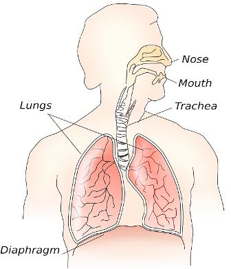 The Profile for Cystic Fibrosis