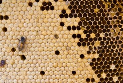 Honey to Treat Haemorrhoids