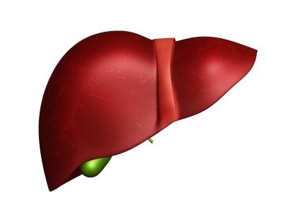 Liver- The Body's Detoxifier