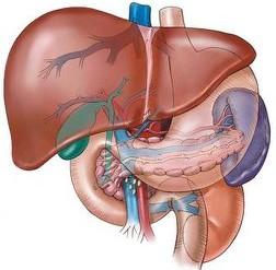 vitamin e helps prevent liver cancer