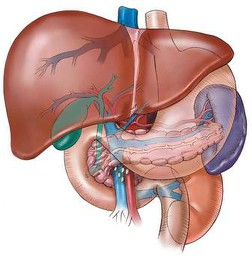 Alternative Treatments For Liver Diseases