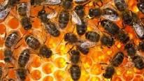 Raw Honey for Health