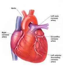 Natural Heart Disease Treatment